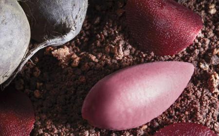 Batterave rouge, poire pochée, yaourt et cacao fumé